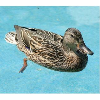 Girl duck statuette