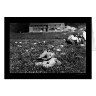 Girl Picking Cranberries Near Rochester MA 1910 Greeting Cards