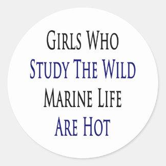 Girls Who Study The Wild Marine Life Are Hot Sticker
