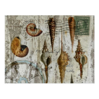 Girly nautical seashells floral fashion postcard