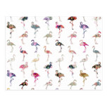 Girly Whimsical Retro Floral Flamingos Pattern Post Cards