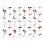 Girly Whimsical Retro Floral Flamingos Pattern Postcard