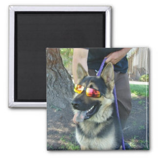 Gismo the dog 2 inch square magnet