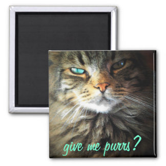 Give me purrs? 2 inch square magnet