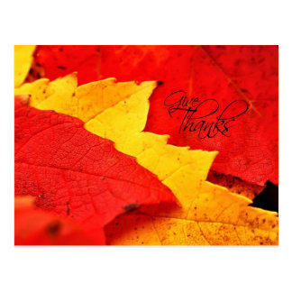 Give Thanks Autumn Leaves Postcard