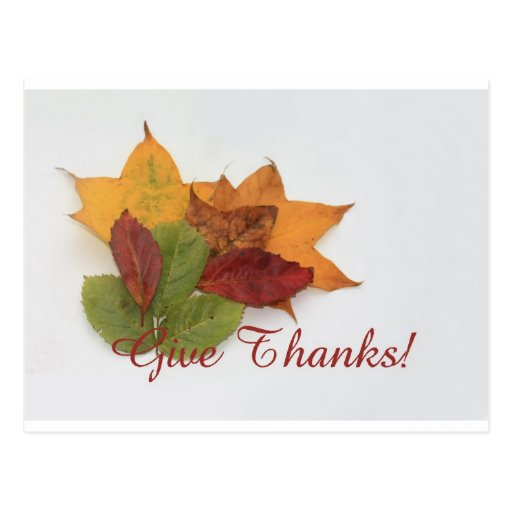 give thanks fall foliage thanksgiving card postcard