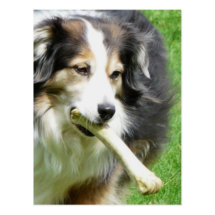Give the Dog a Bone Postcard
