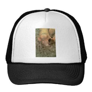 Give us a kiss hats