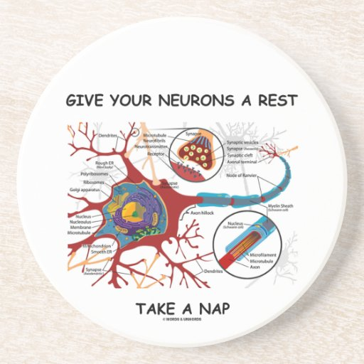 Give Your Neurons A Rest Take a Nap Neuron Synapse Beverage Coasters