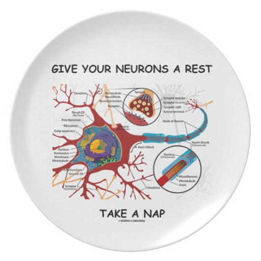 Give Your Neurons A Rest Take a Nap Neuron Synapse Party Plate