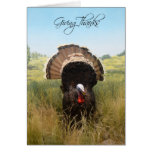 Giving Thanks, turkey thanksgiving Greeting Cards