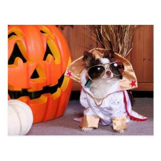 Gizmo - Chihuahua - Thomas Post Card