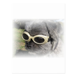 Gizmo the Dog that Helps others Postcard