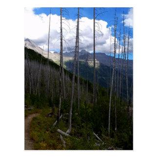 Glacier National Park Highline Trail Burnout Postcard