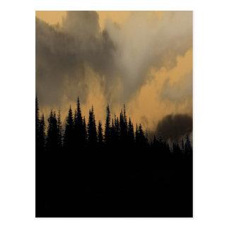 Glacier National Park Menacing Sky and Trees Postcard