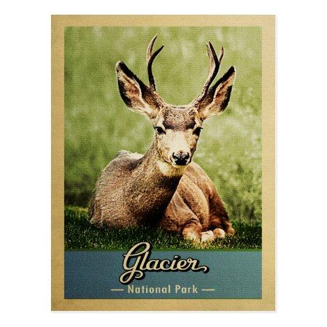 Glacier National Park Vintage Travel Deer Postcard