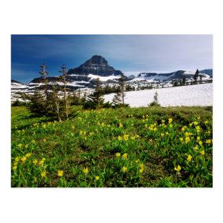 Glacier NP Meadow Postcard