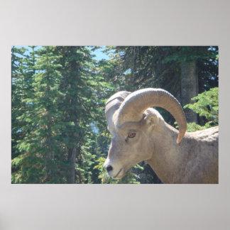 Glacier Park Wildlife Poster