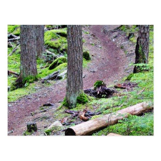 Glacier Trail Postcard