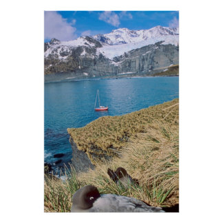 Glaciers and sailing yacht in background print
