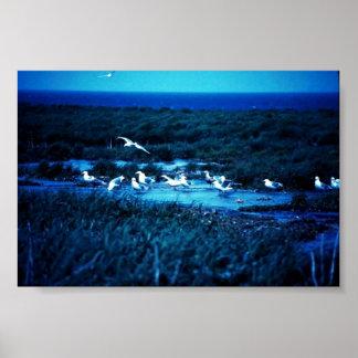 Glacous se fue volando gaviotas posters