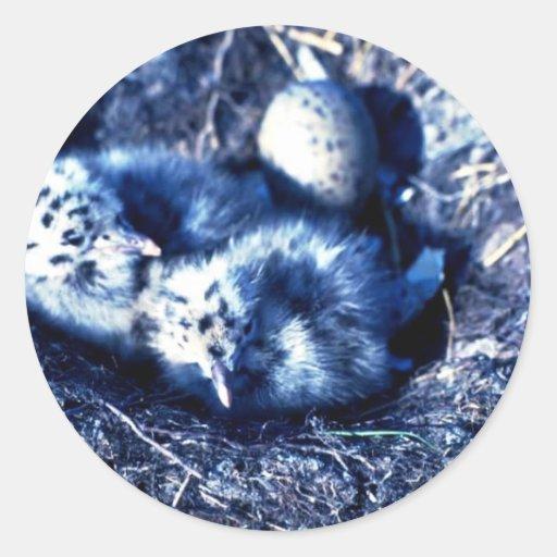 Glacous se fue volando gaviotas pegatina redonda