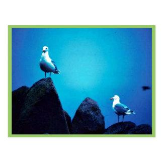 Glacous se fue volando gaviotas postal