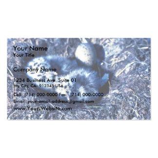 Glacous se fue volando gaviotas tarjetas de negocios