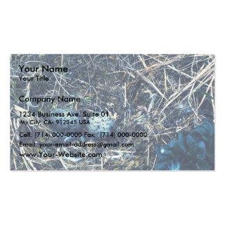 Glacous se fue volando gaviotas tarjetas de visita