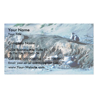 Glacous se fue volando gaviotas tarjeta de visita