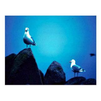Glacous se fue volando gaviotas postales