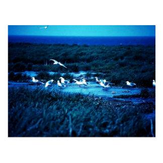 Glacous se fue volando gaviotas tarjeta postal