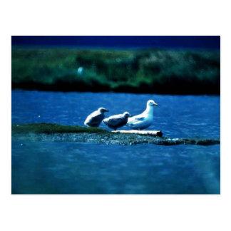 Glacous se fue volando gaviotas tarjetas postales