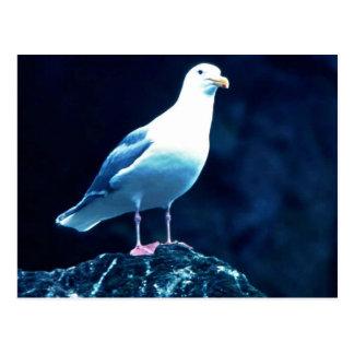 Glacous se fue volando la gaviota postal