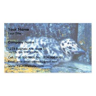 Glacous se fue volando la gaviota tarjeta de visita