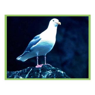 Glacous se fue volando la gaviota tarjeta postal