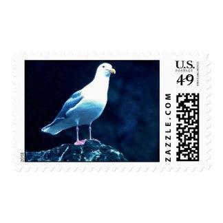 Glacous se fue volando la gaviota timbre postal