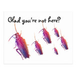 Glad you're not here? Colourful cockroaches Postcard