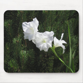 Gladiola against pine tree mouse pad
