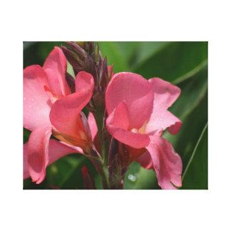 Gladiolas rosado