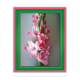 Gladiolo rosado postales