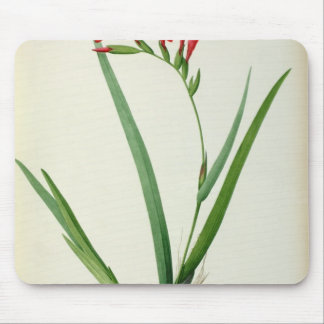 Gladiolus Cardinalis, from `Les Liliacees', 1805 Mouse Pad