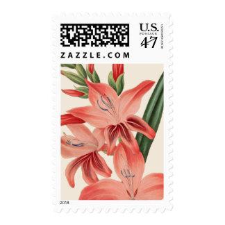 Gladiolus Postage
