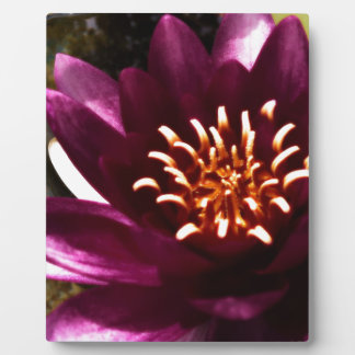 Glamorous Water Lily Plaque