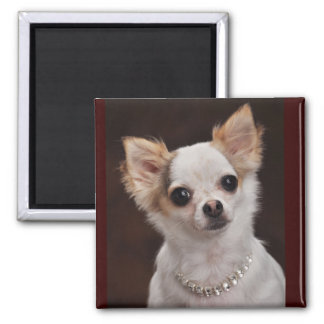 Glamour Chihuahua Diva 2 Inch Square Magnet