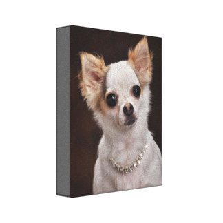 Glamour Chihuahua Diva Gallery Wrap Canvas
