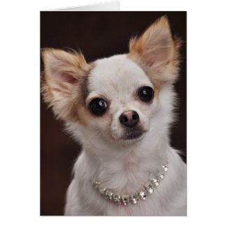 Glamour Chihuahua Diva Greeting Card
