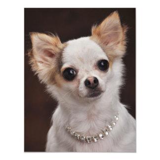 Glamour Chihuahua Diva Card