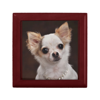 Glamour Chihuahua Diva Trinket Boxes