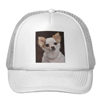 Glamour Chihuahua Diva Mesh Hats